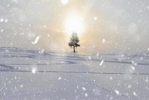 Biei · sunset tree and snow