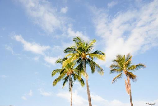 Hawaii palm tree · blue sky
