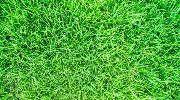 Green image eco image lawn green background material texture
