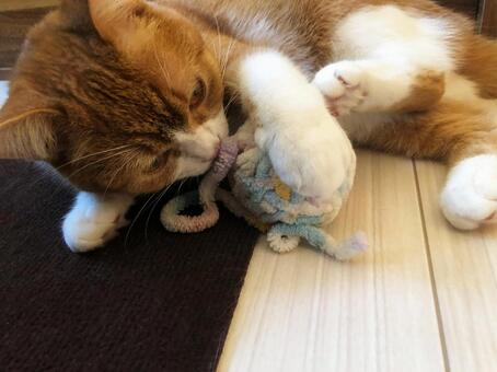Cat 002 playing with a ball of yarn