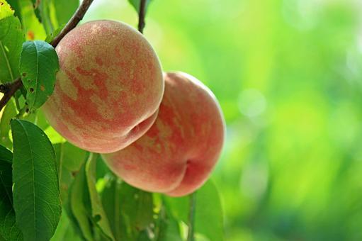 Fukushima peach 2021_10