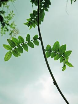 녹색 덩굴 잎 10