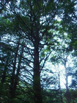 숲의 나뭇잎 사이로 비치는 햇빛