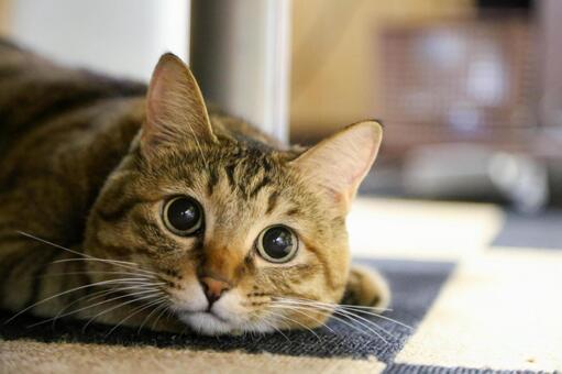 玩爸爸,充滿好奇的可愛貓咪