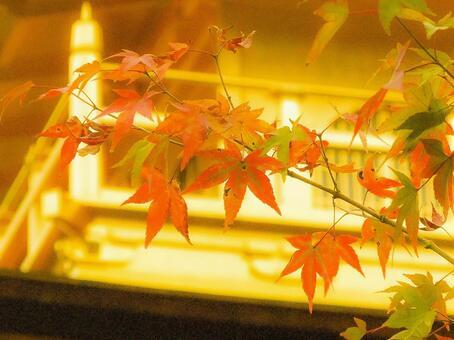 京都在秋天
