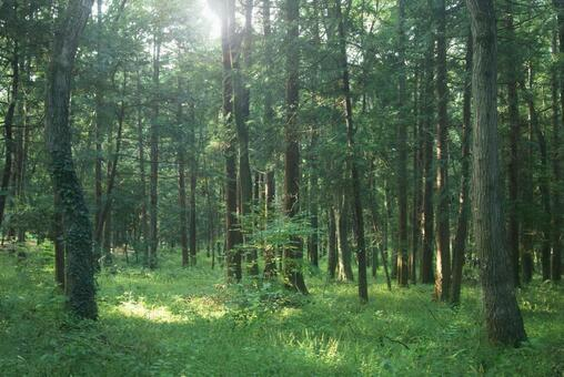 Trees_Forest_110