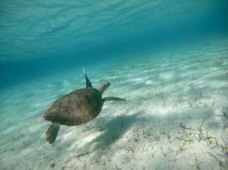 바다 거북의 수영