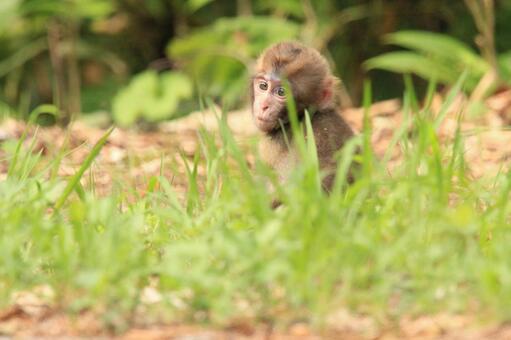 小猴子獨自一人坐