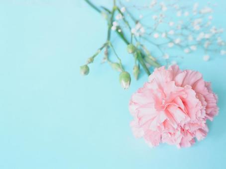 Pink carnation 2