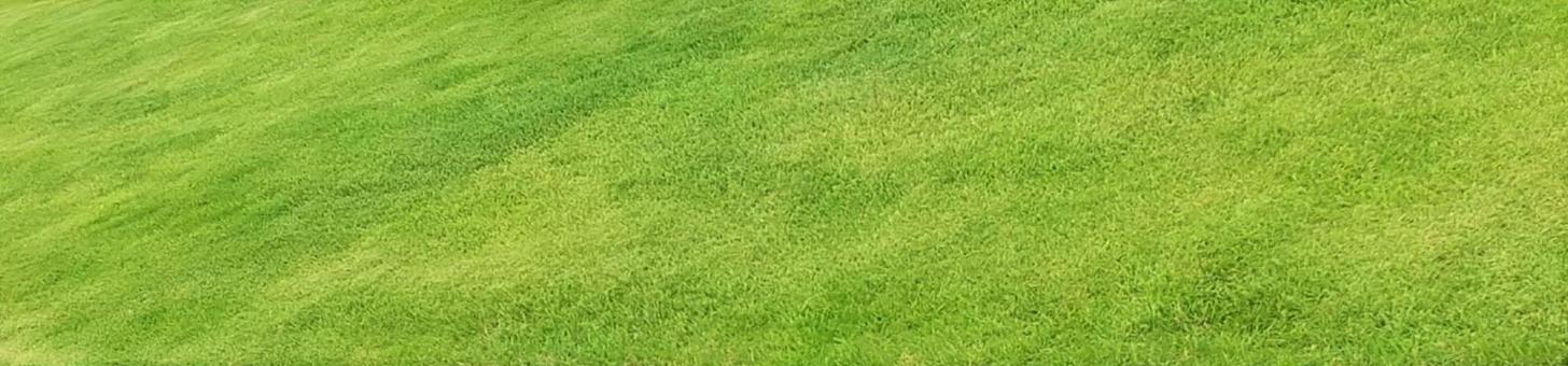 Beautiful lawn landscape image (panorama)