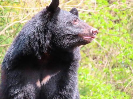 자연스러운 곰