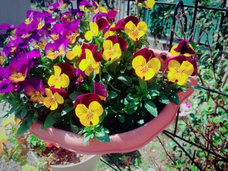 Flower planting flower -3 (hanging basket)