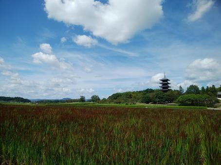 Bi Chugoku Bunji Temple and rice field of red rice