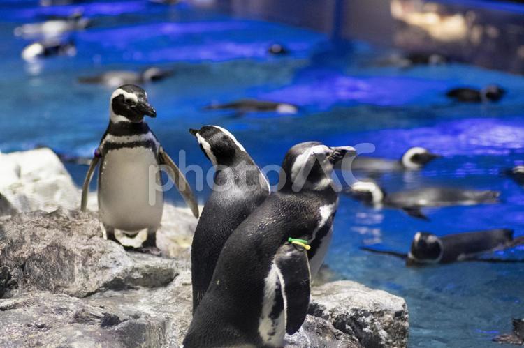 ペンギン すみだ水族館の写真