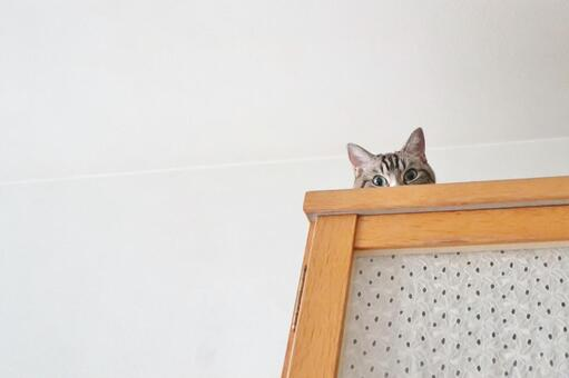 Cat, a cute tabby hiding on a chest of drawers, a little margin copy space background cat