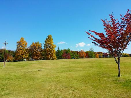 Autumn leaves park scenery 88