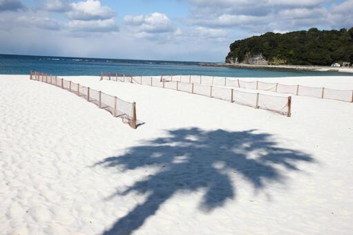 海岸和沙滩排球场