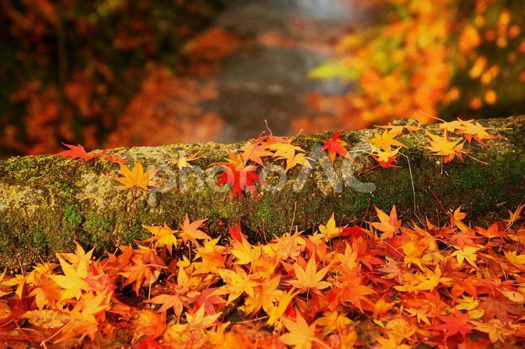 晩秋の輝きの写真