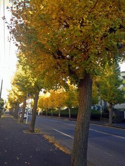 Koganehara · Ginkgo street # 5
