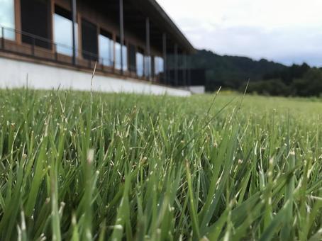 Lawn's meadow 3