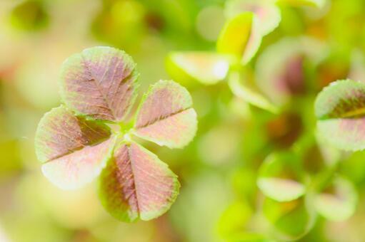 Happy four leaf clover
