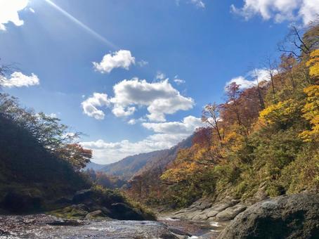 Akita's autumn leaves and blue sky sunshine