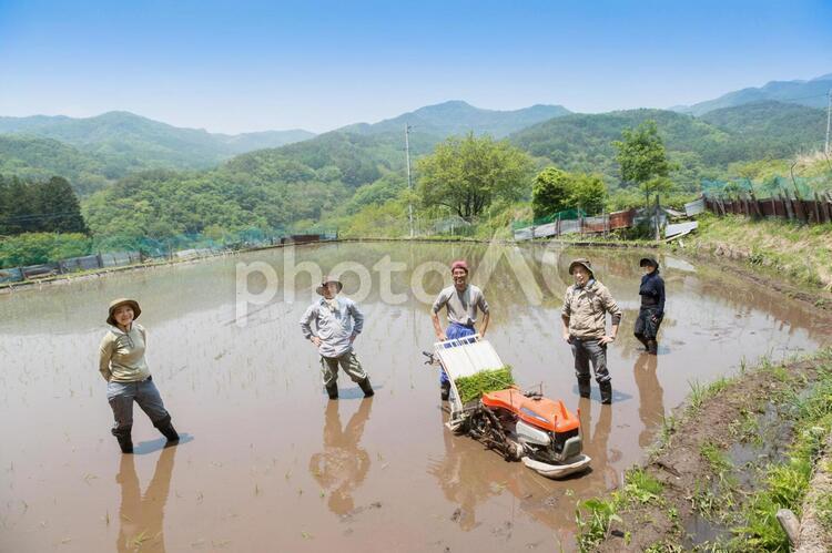 田植えをする日本人3の写真