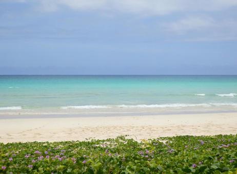南国のビーチを望む