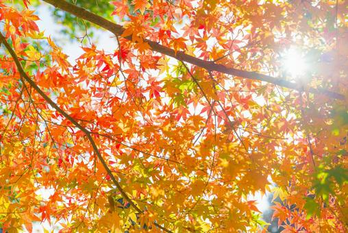 Autumn leaves scenery