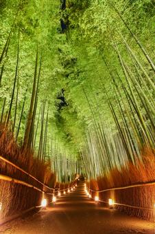 Bamboo forest light up
