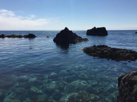 갈조류의 바다
