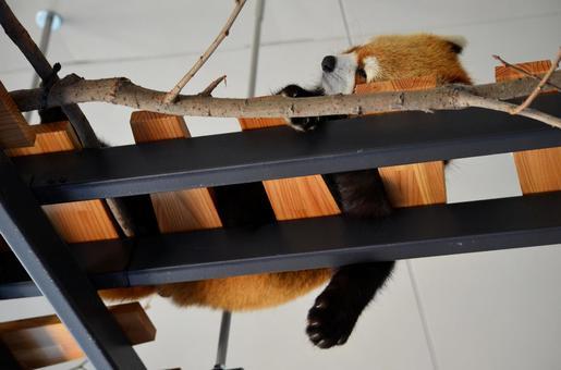 Redress Panda 1