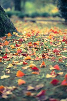 낙엽 19