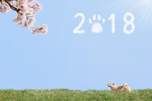 Finally came spring, Yoshikubu Shiba Inu 2018