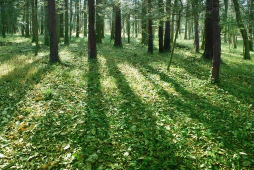 Trees_forest_114