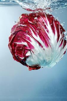Underwater cabbage 3