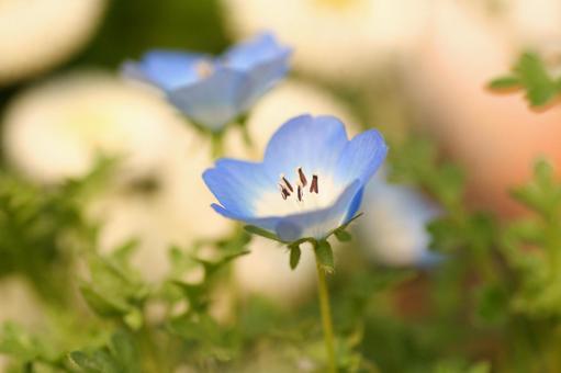 오오이 누 노후 그리 봄 카야 꽃 축제 원예 화단 4 월 5 월