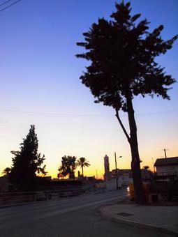 Cyprus endemic plant silhouette