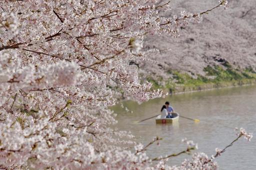 봄 낭만 만개 한 벚꽃