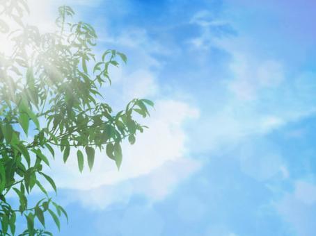 葉子和天空02