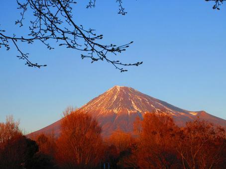 Mt. Fuji in winter in the evening sun 1