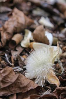 화이트 벨의 솜털
