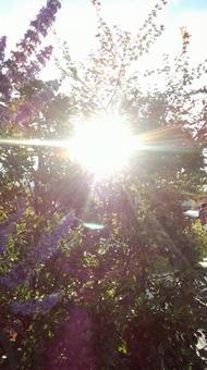 햇살 ~ 꽃 ~