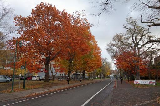 Hokkaido University Namiki