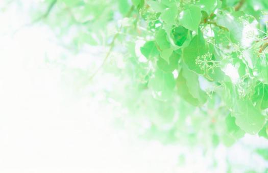 Natsukuni Green
