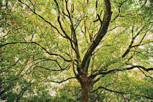 一棵大樹長滿了葉子