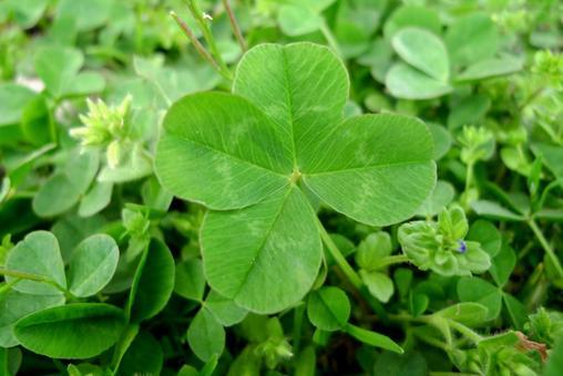 Four leaves clover