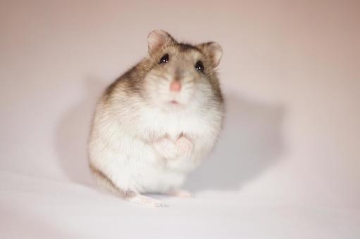 Hamster 3