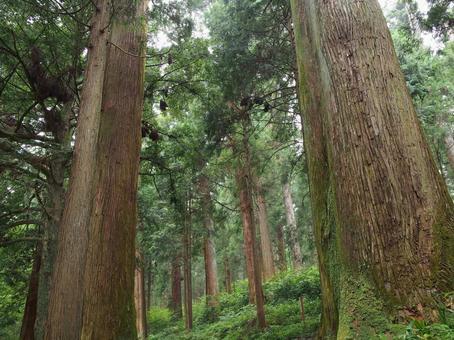 대목의 숲