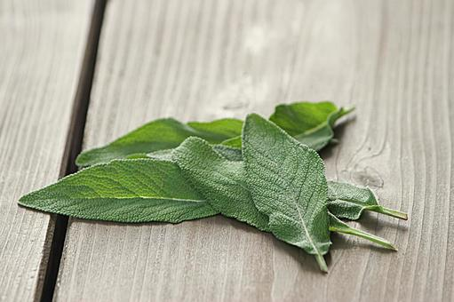 Leaves of raw sage